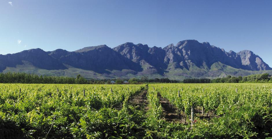 Afrique du Sud viticole