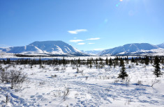 Bild 4 - Alaska Winter Dream