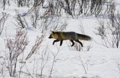 Bild 2 - Arctic Winter Explorer
