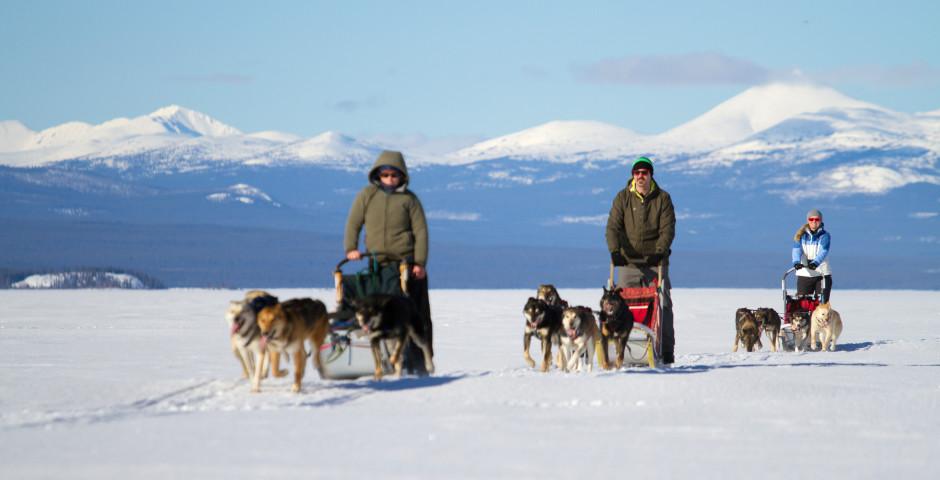 Yukon Dog Sledding Adventure