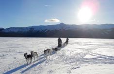 Bild 1 - Yukon Dog Sledding Adventure