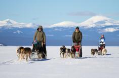 Bild 4 - Yukon Dog Sledding Adventure