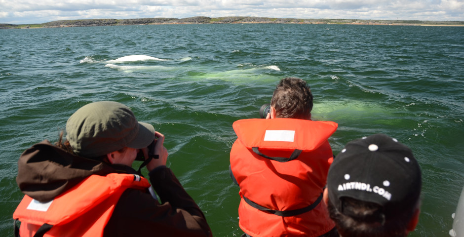 Belugas, Bears and Blooms in Churchill