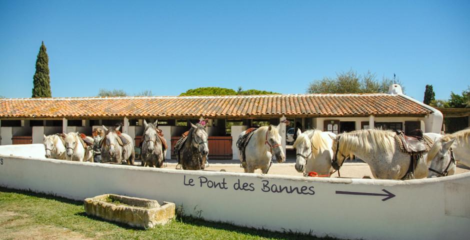 Vacances équestres gratuites pour enfants* à L'Auberge Cavalière du Pont des Bannes