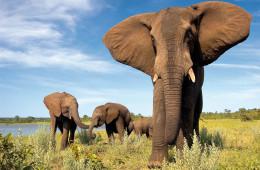 Fascination Afrique du Sud et Namibie