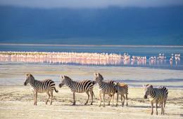 Grosse Kenia-Safari