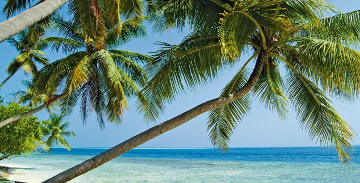 Image 7292209 - Biyadhoo Island Resort
