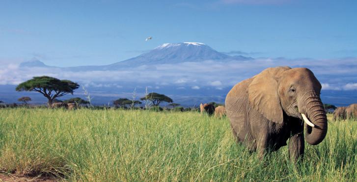 Parc national d'Amboseli en bas du Kilimandjaro, Kenya