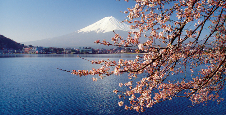 Kirschblüte, Japan