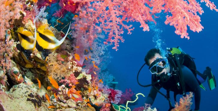 Unterwasserwelt, Marsa Alam