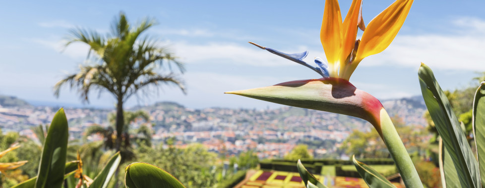 Royal Orchid, Madeira - Migros Ferien