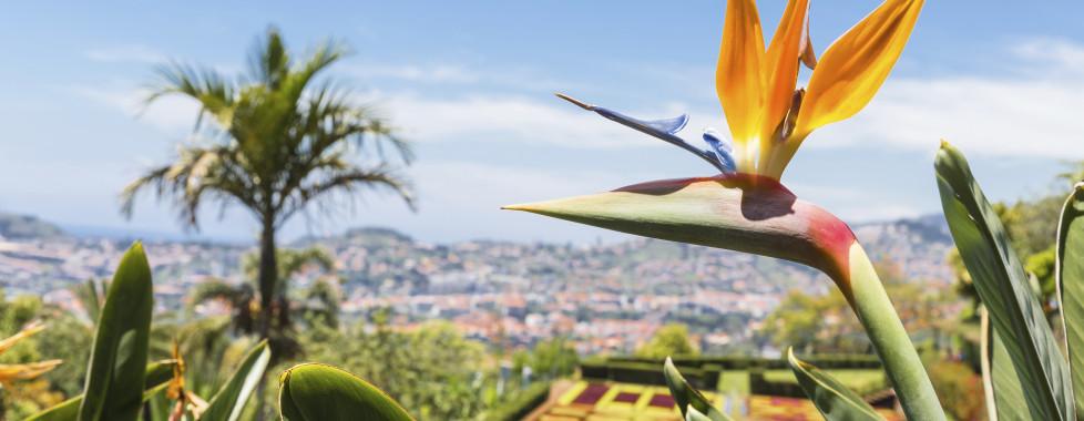 Monte Mar Palace, Madeira - Migros Ferien