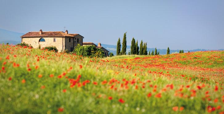 Pavot rouge, Toscane du Sud