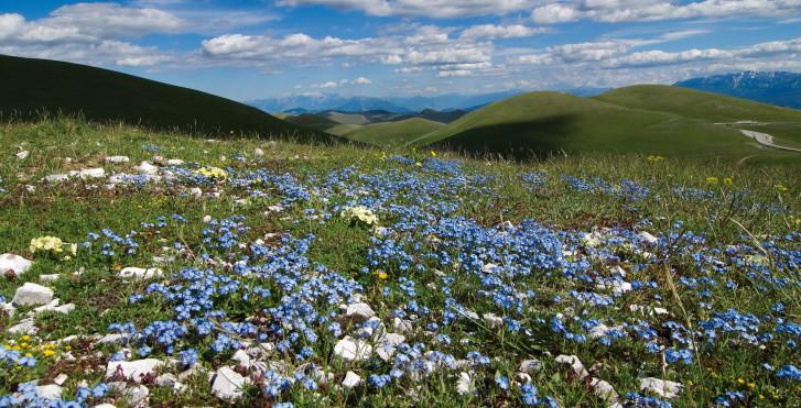 Blühendes Hinterland, Abruzzen
