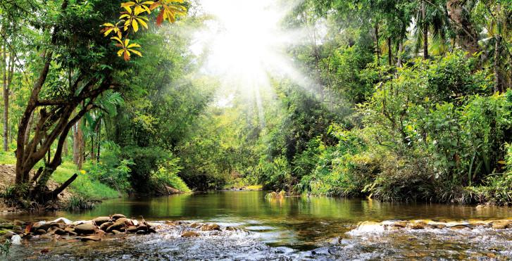 Dschungel, Khao Lak