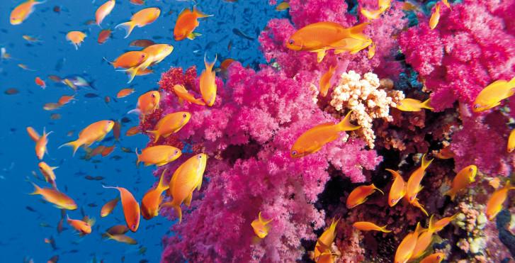 Unterwasserwelt, Malediven