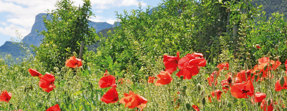 Theiner's Garten Bio Vitalhotel, Etschtal - Migros Ferien