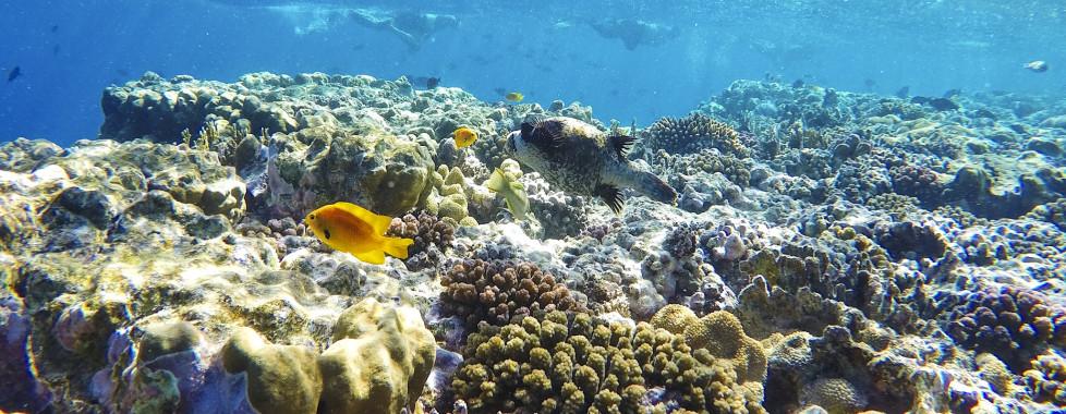 Unterwasserwelt in El Quseir