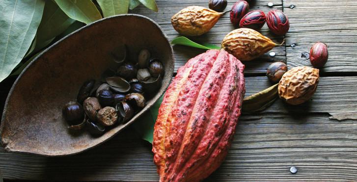 Kakaofrucht und Muskatnuss, Grenada