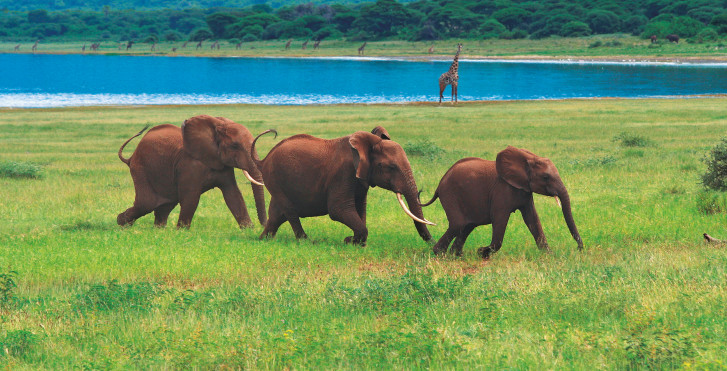 Elefanten, Tansania