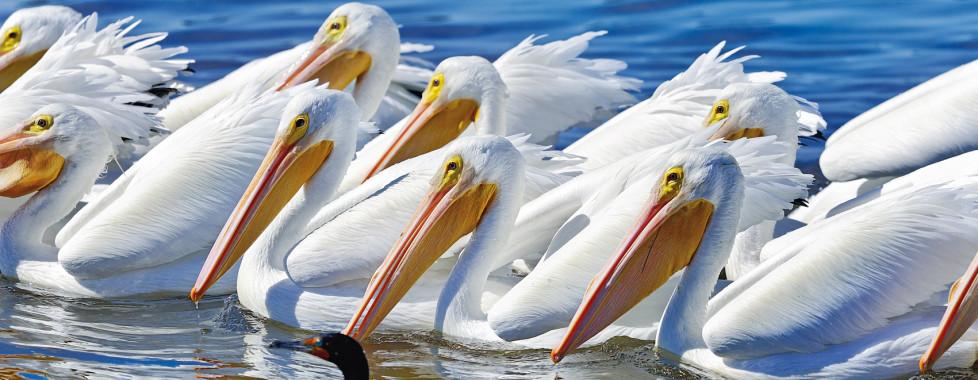 Zota Beach Resort, Longboat Key - Vacances Migros