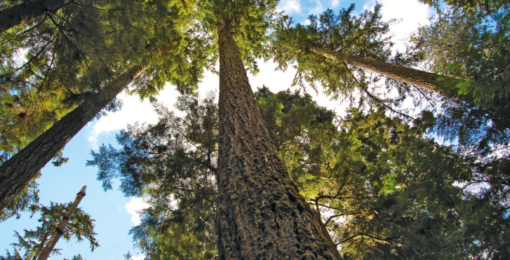 MacMillan Provincial Park, Vancouver Island