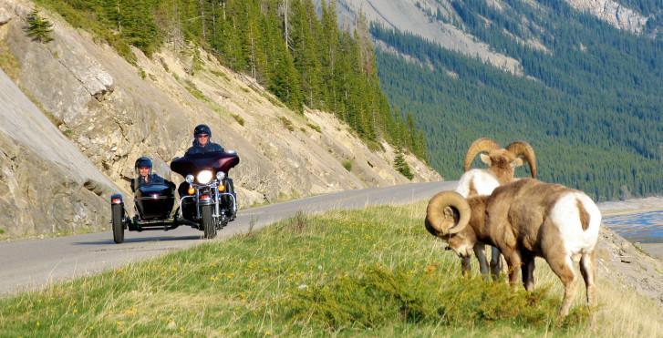 Route de montagne, Jasper