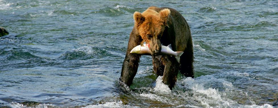 Westmark Anchorage, Alaska - Migros Ferien