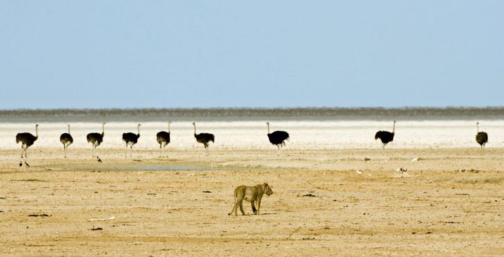 Safari, Namibia