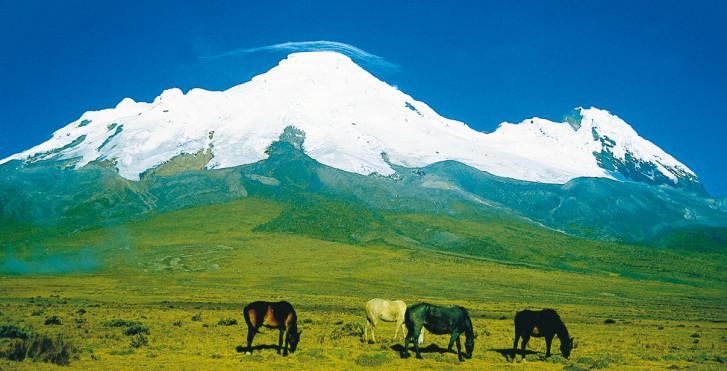 Reserva ecológica Antisana, Équateur