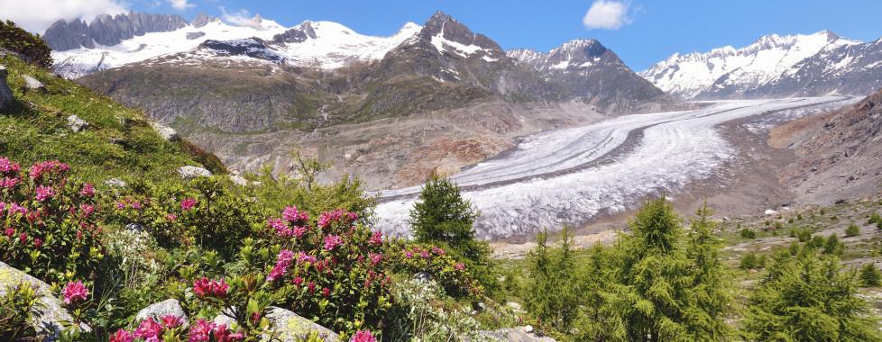 Glacier d'Aletsch en été