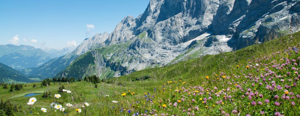 Paysage des montagnes