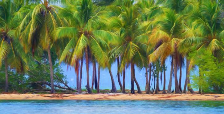 Palmiers, Samana, République Dominicaine