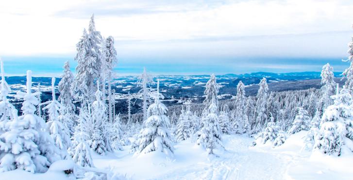 La forêt bavaroise en hiver