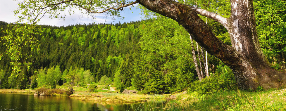 Hôtel de vacances Hubertus, Forêt bavaroise - Vacances Migros