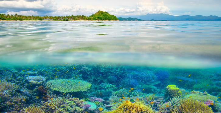 Unterwasserwelt, Lombok