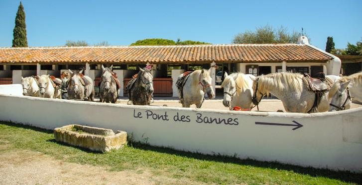 Image 31908763 - Vacances équestres à L'Auberge Cavalière du Pont des Bannes