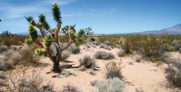 Wüste rund um Palm Springs