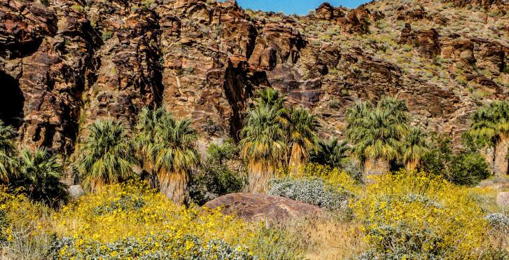 Landschaft rund um Palm Springs