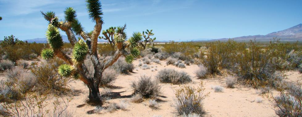 The Saguaro Palm Springs, Palm Springs - Vacances Migros