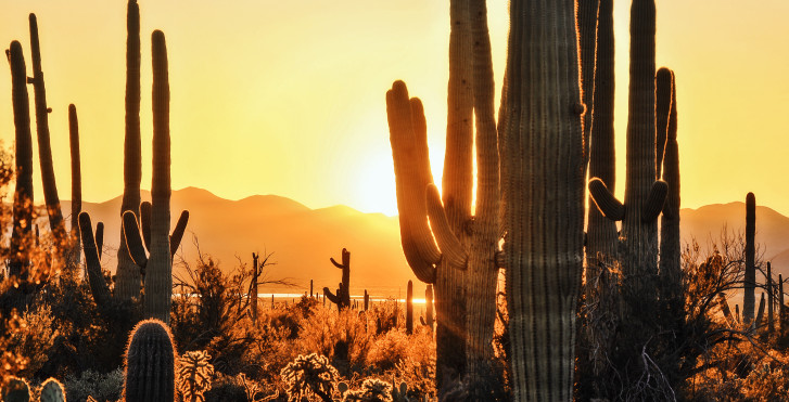Cactus, Tucson
