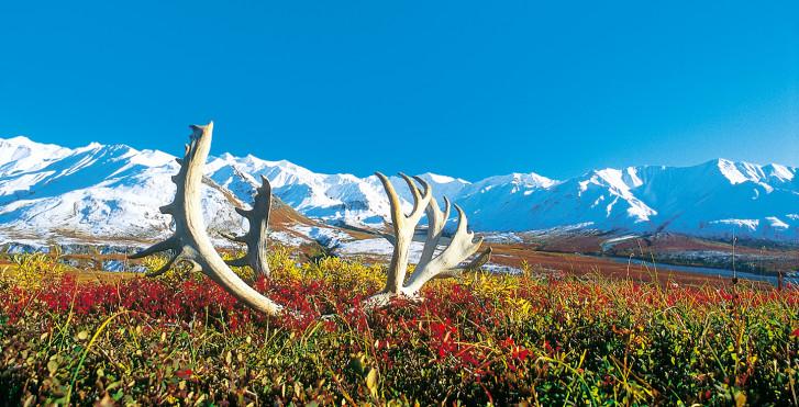 Parc national de Denali