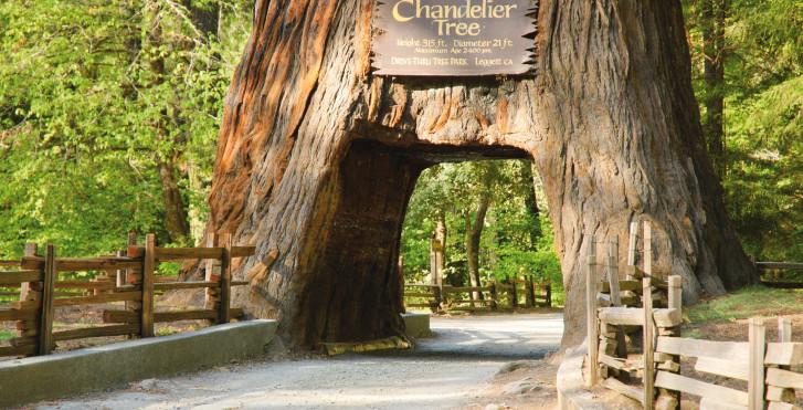 Chandelier Tree, Eureka
