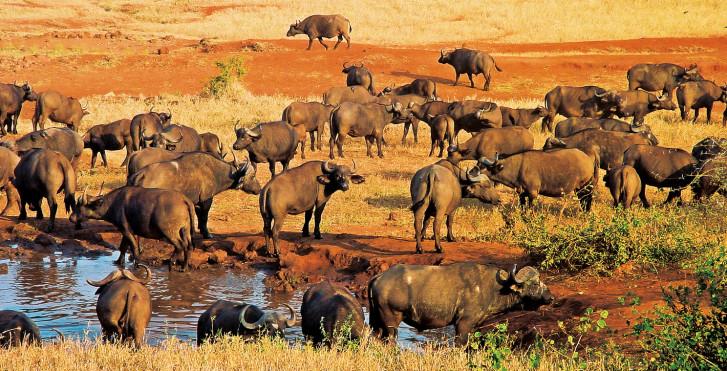 Tsavo-Erlebnis-Safari per Zug