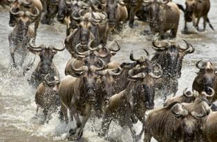 Safari en Tanzanie (en groupe)