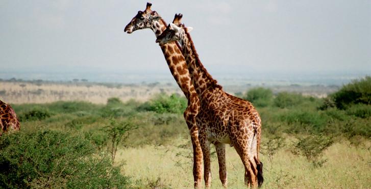 Kurztrip Serengeti