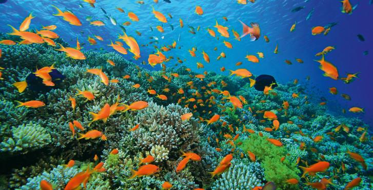 Expédition de plongée: El Guddy Route Mini Safari