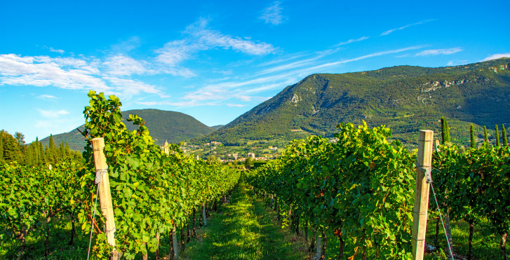 Vignobles près de Bardolino