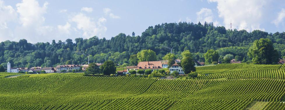 Paysages d'Yverdon-les-Bains