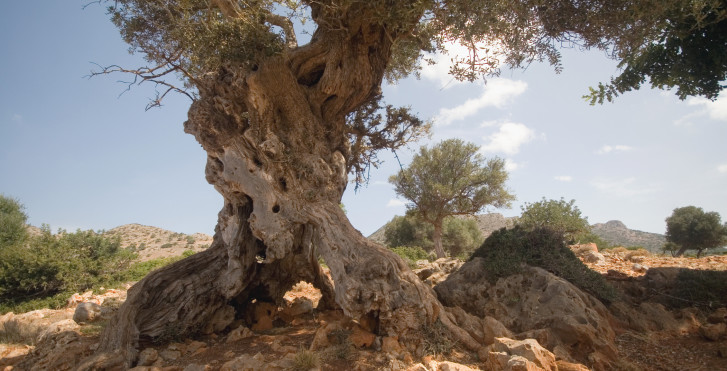 Image 27326723 - Fly & Drive Crète Est